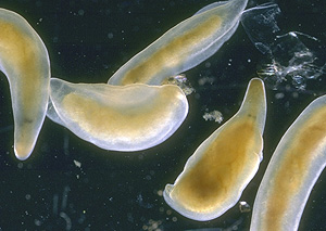 how to use flatworm exit