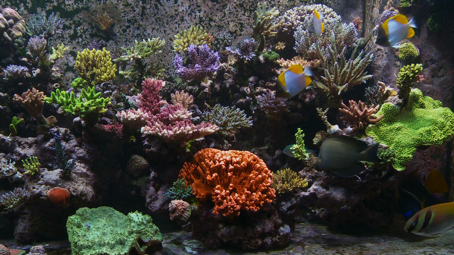 Reef Aquarium Dvd A Setup Amp Maintenance Guide