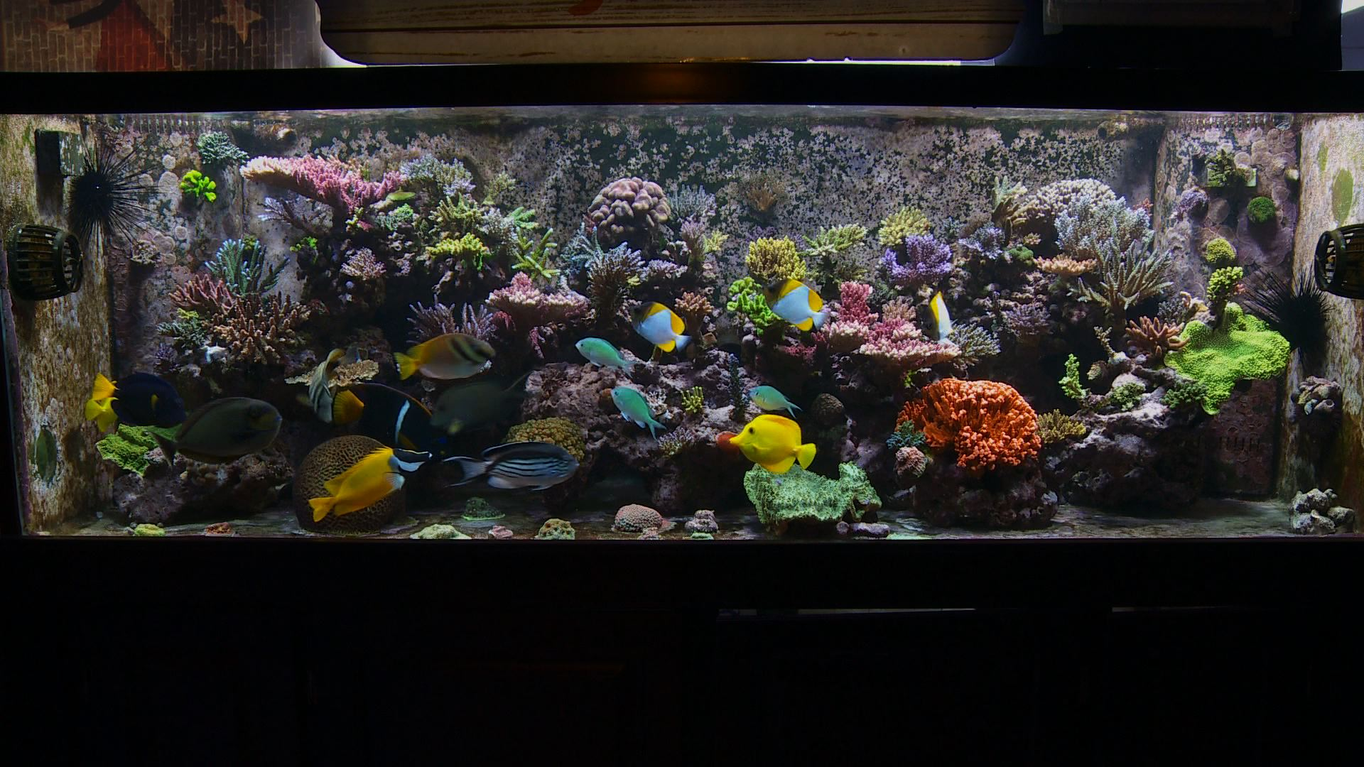 Footage from Reef Aquarium TV